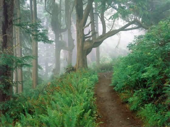 oregon_hiking