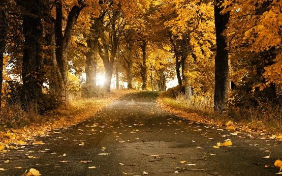 fall-wallpaper